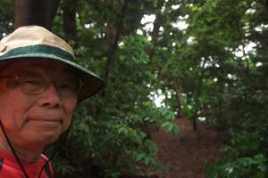 静かな森を歩くとリフレッシュ