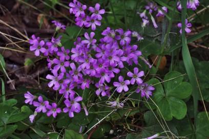 花の名前は判りませんが綺麗です