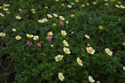 9:45 白馬大池のお花畑に到着