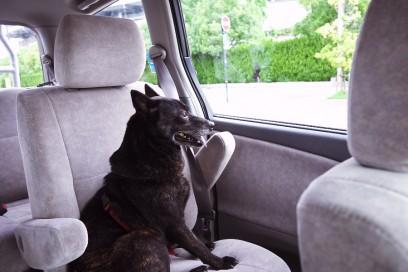 エスティマの後部座席で悠然と外を眺める