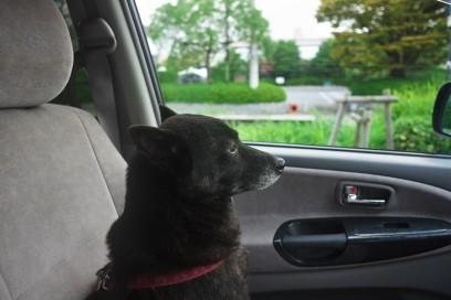 カイは車の助手席で