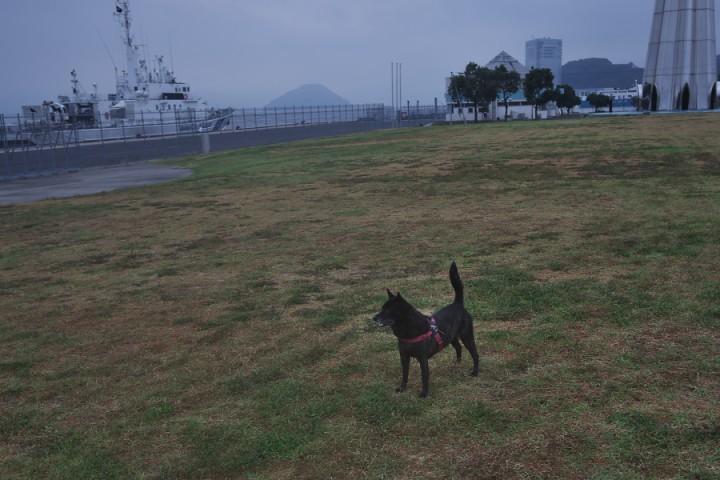 宇品みなと波止場公園 カイは元気 海上保安庁の船が接岸