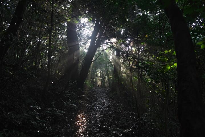 森は湿気が多く煙っています カイは先で待っています