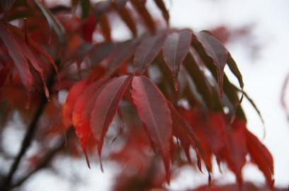 ようやく秋らしい雰囲気の木々に