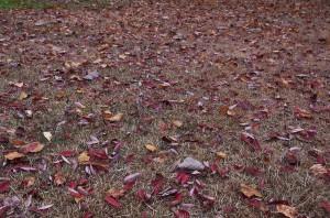道は枯葉の絨毯