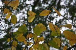 落ち葉となる木々