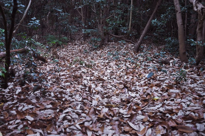 枯葉が絨毯のよう 静かな森です