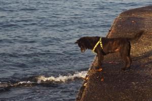 海を見つめている