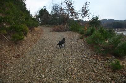 裏山への道をカイが歩く