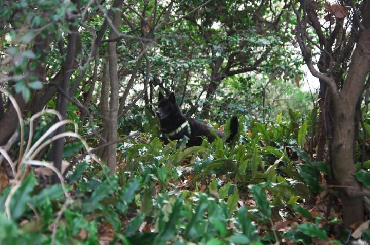 森の中でカイは大喜びです