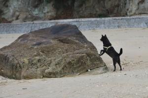 干潮の砂浜で