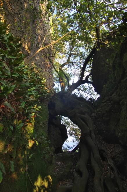 五剣山の途中にある根のトンネル