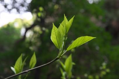 森の中に輝くような新緑