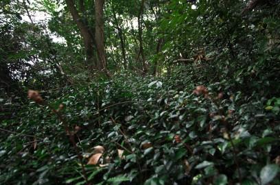元宇品の森は原生林