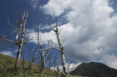 縦走路の白骨木を見ながら