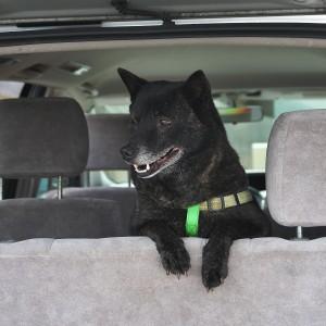 カイは車でお留守番