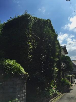 ツタに覆われたグリーンハウス