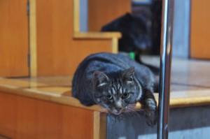 ネコのクーが興味深そうに