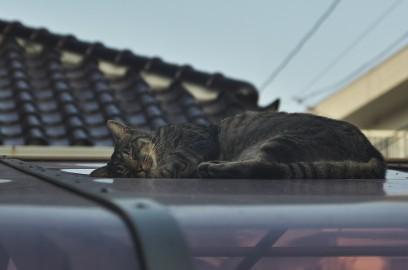 クーちゃんは暑い屋根の上で昼寝