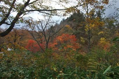 紅葉した雑木林を歩く