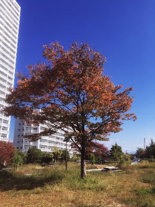 渚公園の木々も紅葉