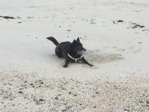 砂浜でカイもご機嫌