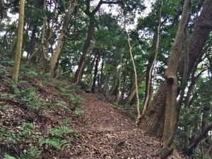 原生林の中の遊歩道