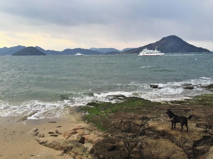 波の荒い広島湾 カイは海を眺めています
