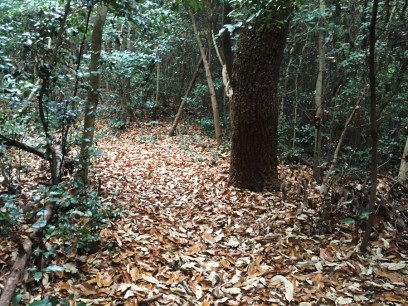 元宇品の枯れ葉の遊歩道
