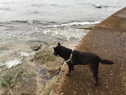 海を眺めるカイ