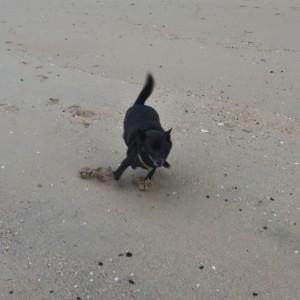 砂浜を駆け巡って