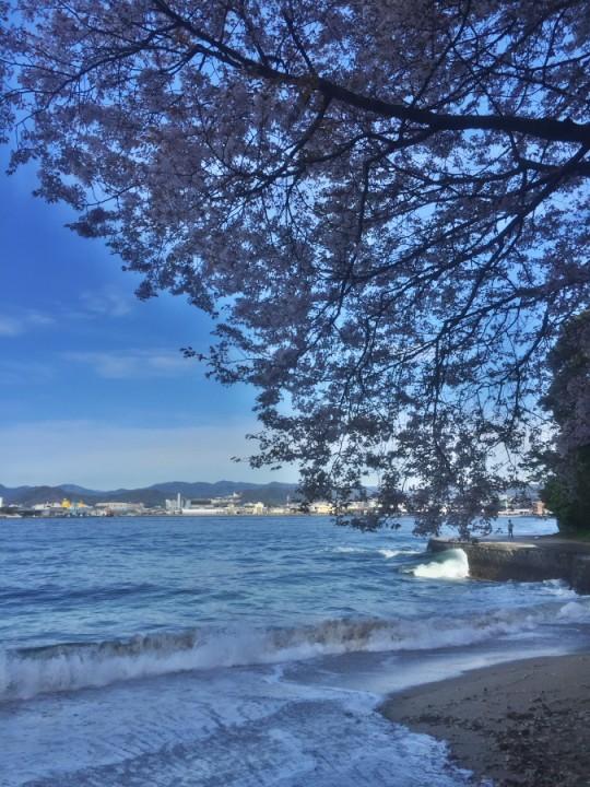 山陰になった山桜