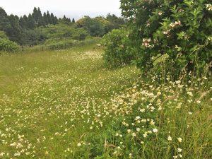 山頂には花が咲いている