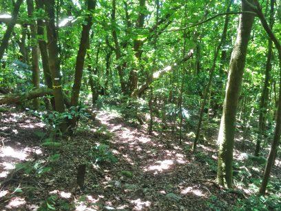 亜熱帯の森の中