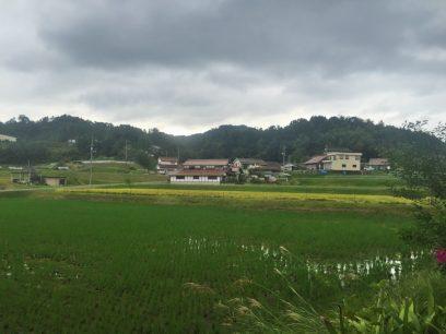 今日は千代田は曇りですね