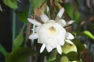 今年も多くの花が咲きました