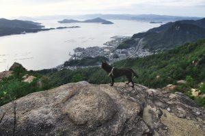 岩山からカイが眺めている