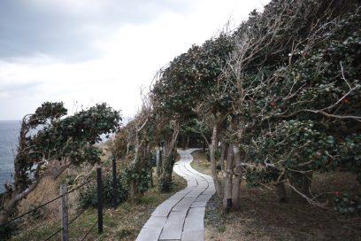 岬の先端は椿の林です