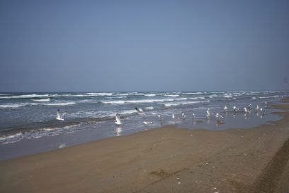 海岸にはカモメがいっぱい