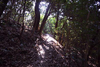森は新緑の香りが満ちてきました